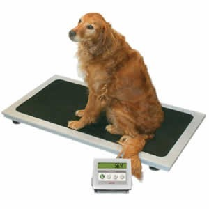 Medical/Health Scales
